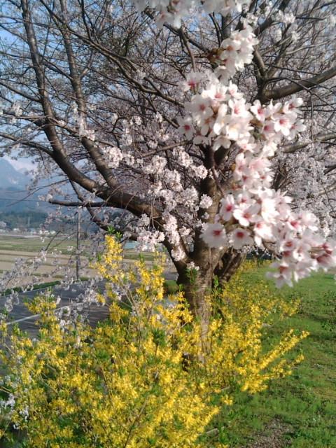 春がきたね(^.^)???