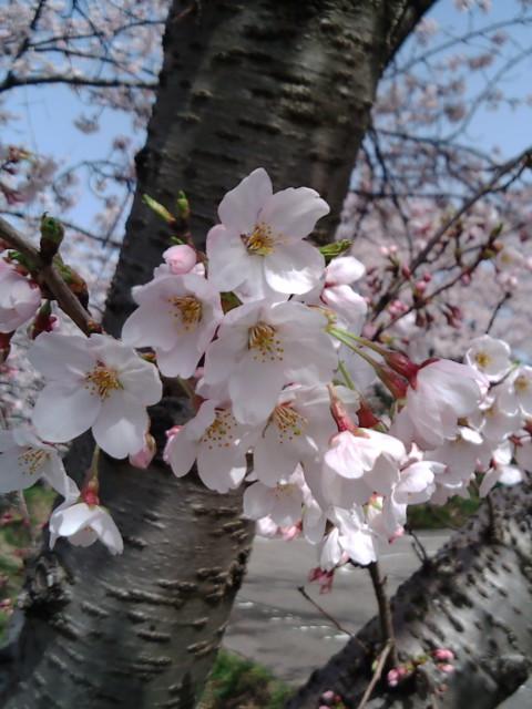 春ですね☆